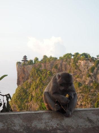 Little Thief Bali Bali, Indonesia Nature Animal Wildlife Monkey Primate Sunglasses Temple Thief Travel Destinations EyeEmNewHere EyeEmNewHere EyeEmNewHere Be. Ready.