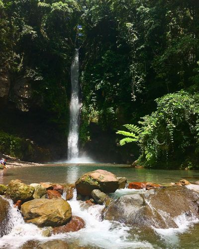 Tuasan Falls Camiguin Philippines Philippines Camiguin Tuasanfalls Waterfalls Water Tree Plant Motion Nature Sunlight Day Beauty In Nature