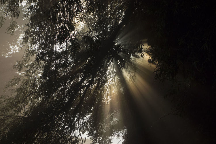 Low angle view of sunlight streaming through silhouette trees in forest