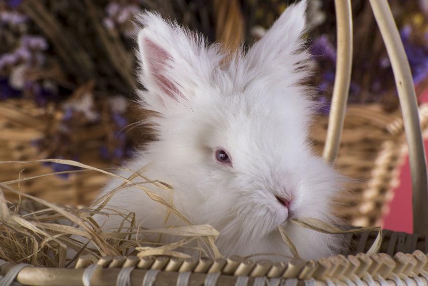 easter bunny Bunny 🐰 Easter Easter Bunny Easter Ready Easter Sunday Easter Basket  Bunny  Bunny Ears