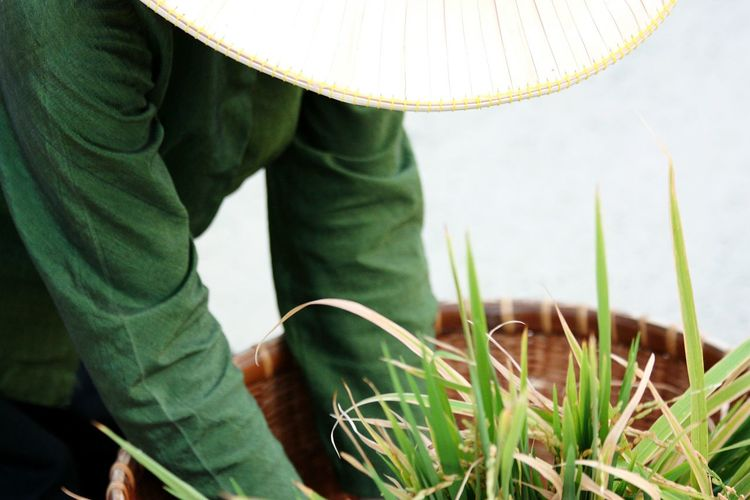 Farmer Keeping Crops In Basket