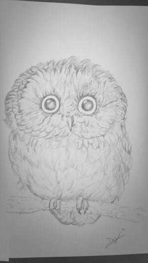Drawing Pencil Sketch  Owl Tattoo Design