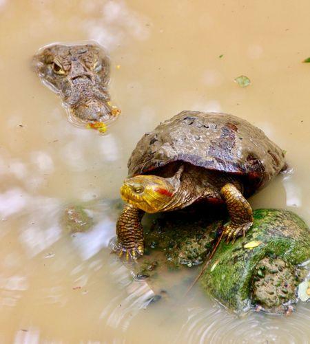 Reptile Water Aquatic Tortoise No People Nature