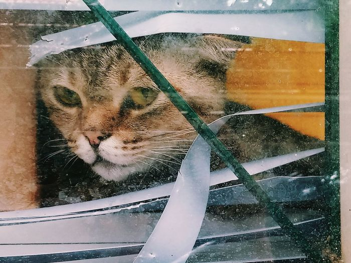 a cat looking out from windowpane on raining day feel sadly Look At Camera A Cat Lonely Cat Worry Wait Waiting Pets Water Domestic Cat Window Feline Looking Through Window Close-up Transparent Windshield Rainy Season