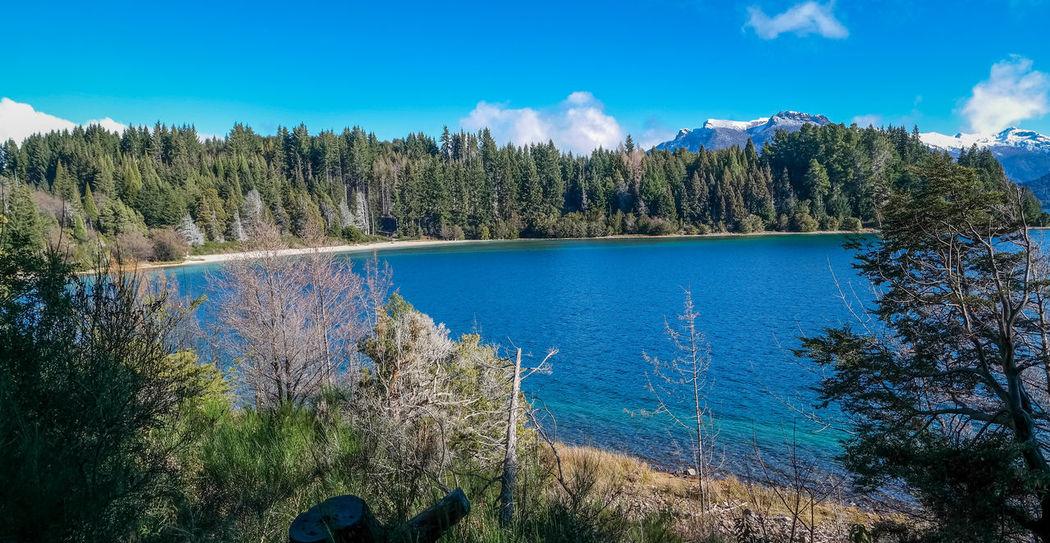 Isla Victoria -Bariloche Beauty In Nature Day Forest Isla Victoria Mountain Nature Sky Tranquility Tree