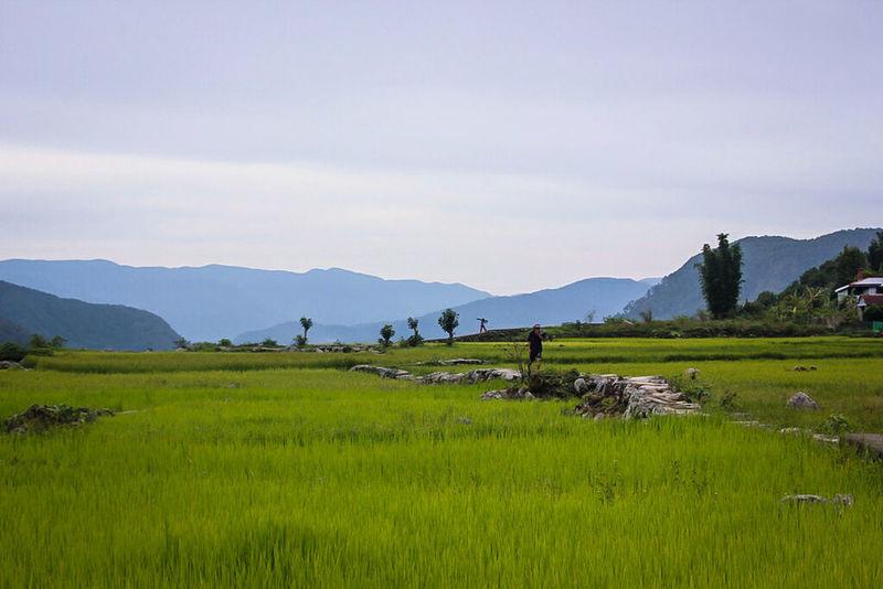 Rice Field Sagada Adventure Bomod-ok Falls Walking Around Taking Pictures Enjoying Life Beauty In Nature Locals