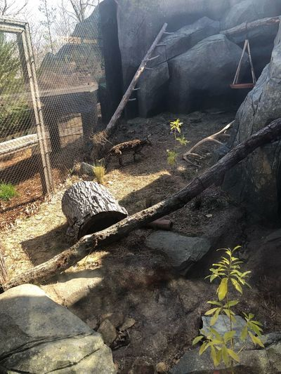 Ocelot enclosure Ocelot Sunlight Shadow Nature Day No People High Angle View Outdoors