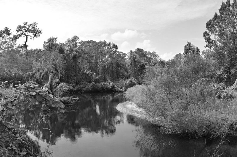 Nice hike at little manatee river state park Tree Nature Water Beauty In Nature Lake Tranquility Reflection No People Tranquil Scene Forest Sky Outdoors Growth Scenics Day Landscape