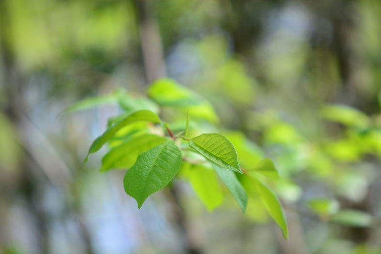 Leaf Plant Part Green Color Plant Growth Close-up Beauty In Nature Nature No People Tree Focus On Foreground Selective Focus Day Outdoors Tranquility Leaves Beginnings Branch Fragility Vulnerability