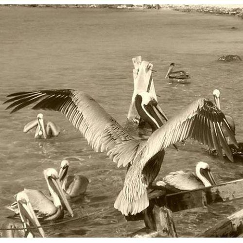 Sea 2016 Venezuela Vacation Viajandoconcedula Mochima Birdsofinstagram Nature's Diversities The Great Outdoors - 2016 EyeEm Awards Black And White Friday