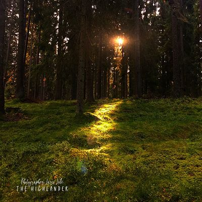 Beauty In Nature Nature Forest Tree Sunset Grass