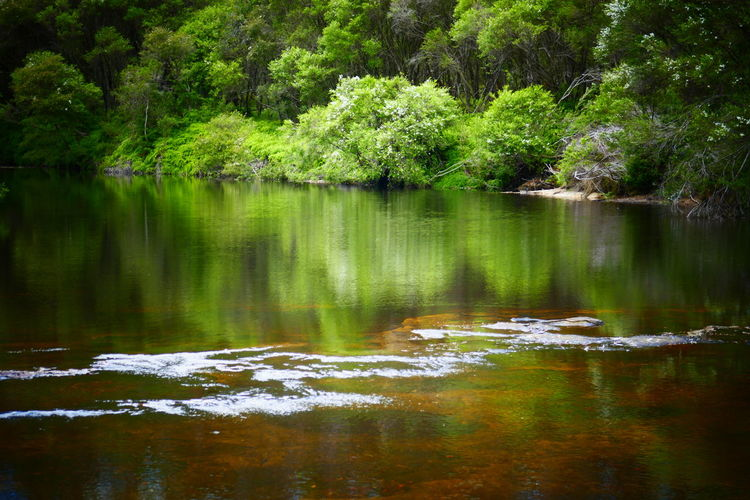 Australia Australian Landscape Bush Green Nature Nature Travel Reflection Reflections In The Water River Serinity Water EyeEmNewHere Travel Photography Australian Bush New South Wales  The Great Outdoors - 2017 EyeEm Awards