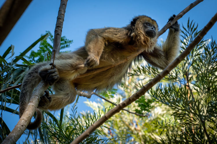 Low angle view of monkey on tree