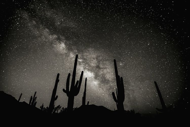Space Dark Tranquil Scene Scenics Night Tranquility Star - Space Silhouette Low Angle View Beauty In Nature Cactus Nature Sky Astronomy Outdoors Environment Star Field Majestic Tall Field Space Dark First Eyeem Photo
