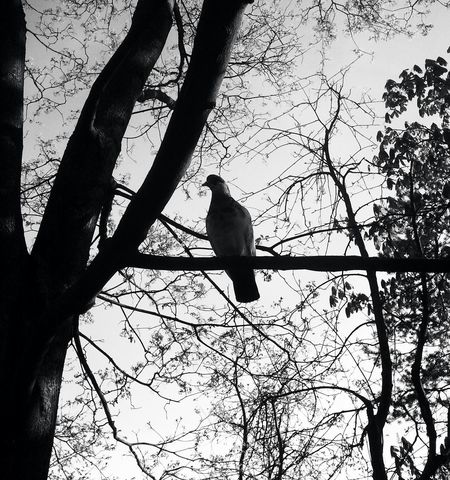 🐦Blackandwhite Monochrome EyeEm Nature Lover Captured Moment Bw_collection Light And Shadow Eye4photography  EyeEm Best Shots - Black + White Silhouette Taking Photos