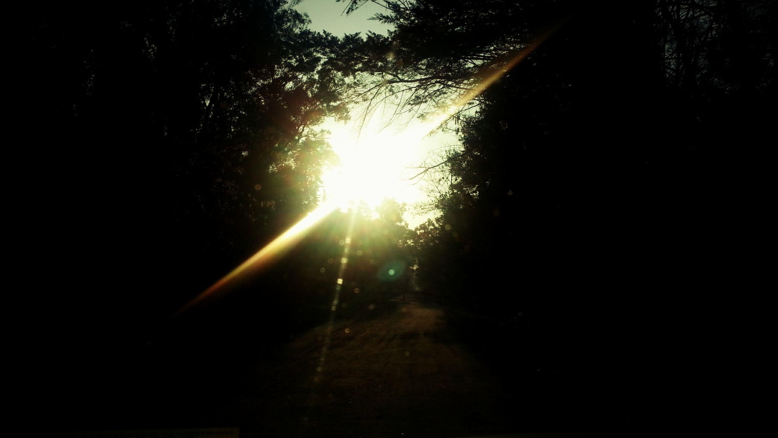 sun, tree, transportation, sunbeam, the way forward, lens flare, sunlight, silhouette, road, sunset, vanishing point, diminishing perspective, street, car, back lit, nature, mode of transport, tranquility, dark, land vehicle