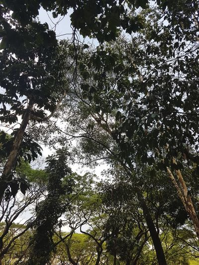 Up above Low Angle View Tree Nature Backgrounds Beauty In Nature No People Outdoors Branch Sky