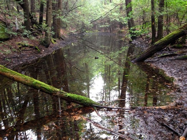 *Reflection... start the day or end it that way.* Taking Photos Mother Nature Is My Jailer... And My Mistress
