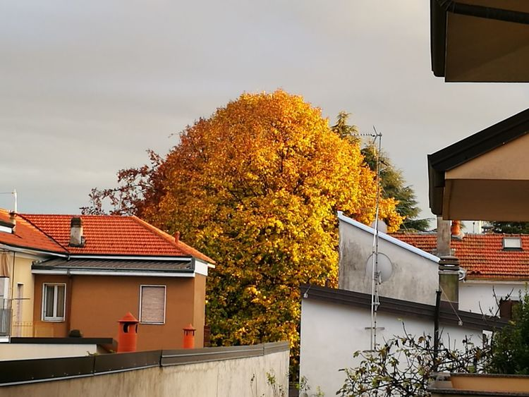 Autumn🍁🍁🍁 Yellow Leaves From My Window