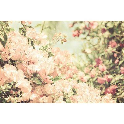 Kanang silingan nga nindot kayg garden2 churvalu ba. Hahaa VSCO Vscocam VSCOPH Vscoedit vscodaily
