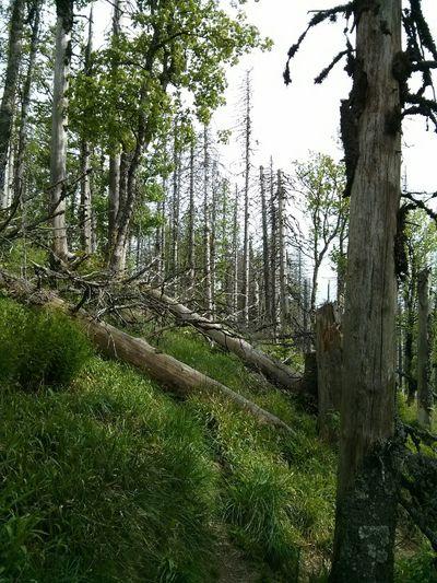 Feldberg Hochschwarzwald Blackforest Schwarzwald #wandern
