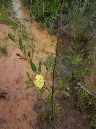 Nascente Nioaque Ms Nascente EyeEm Selects Quintal Brasil Mato Grosso Do Sul Casinha Simples Simplicidade Ms Paz Vida Roca Fazenda Leaf High Angle View Close-up Plant