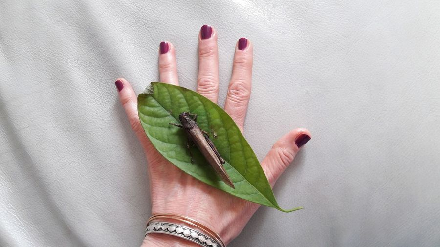 grasshopper on hand Grasshopper Grasshopper Insect Nature Insect Insect Photography Insect Photo Skin Hand Light And Shadow Part Of Body Personal Perspective Leaf Photography Woman Portrait Human Hand Nail Polish Fingernail Holding Human Finger Close-up Palm Pink Nail Polish Ant Dragonfly