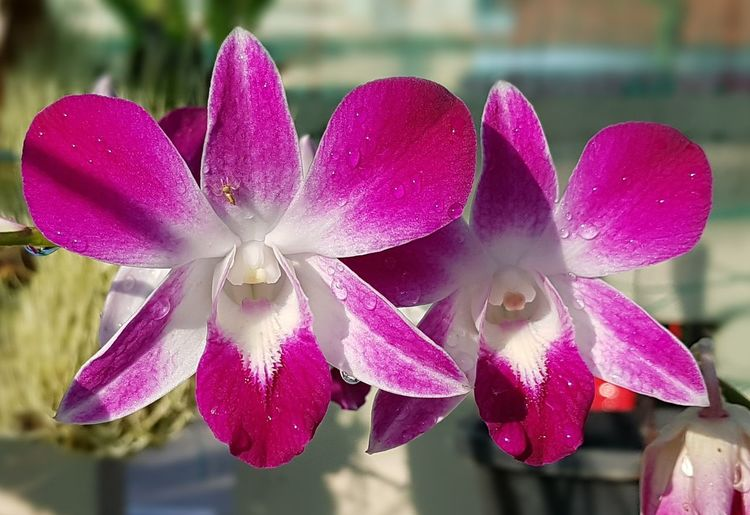 my orchids....