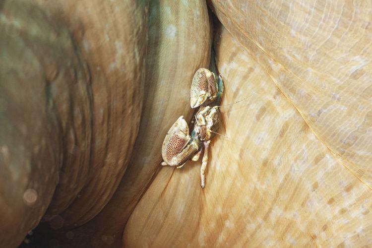 High angle view of shell on wood