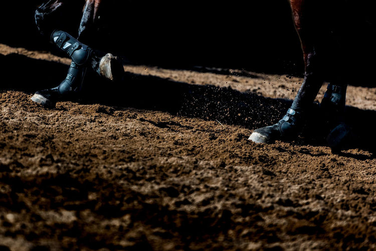 Cheval Nature Animals Dirt Field Horse Photography  Human Body Part Sport