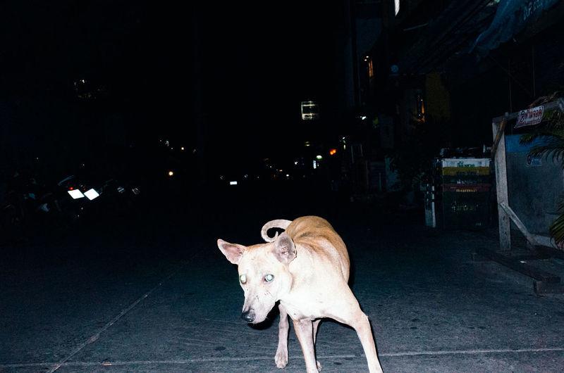 Horse on illuminated street at night