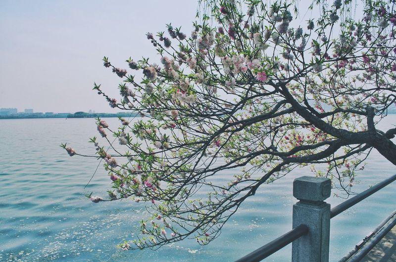 Flowerporn Flower Flowers Spring People Watching Traveling