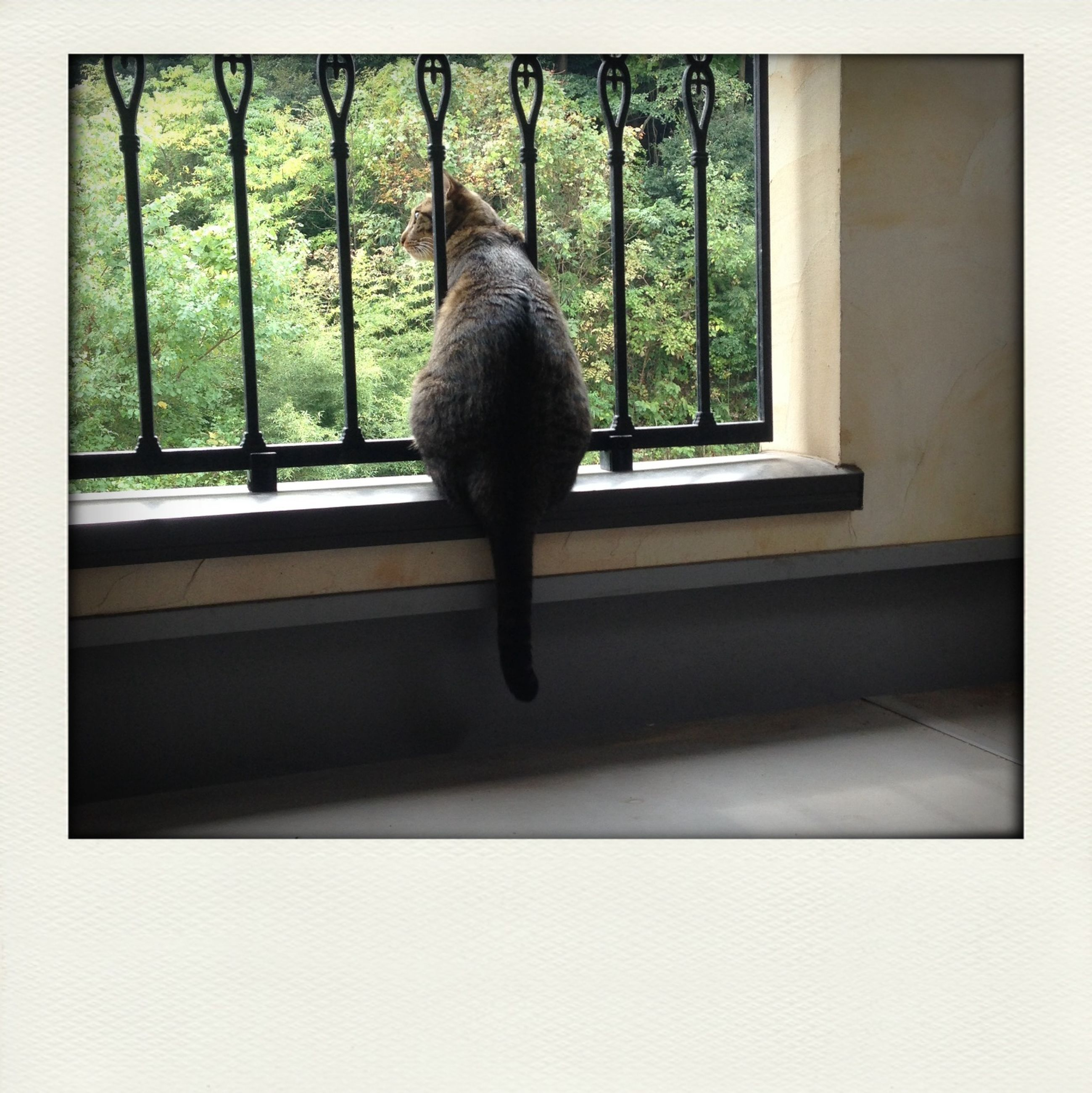 animal themes, transfer print, one animal, auto post production filter, wildlife, animals in the wild, bird, window, domestic animals, pets, domestic cat, low angle view, mammal, indoors, day, no people, cat, perching, side view, full length