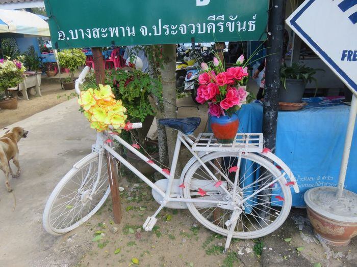 Bicycle flower stand 6444013 Mode Of Transport Flowers_collection Outdoors Summer Paint The Town Yellow