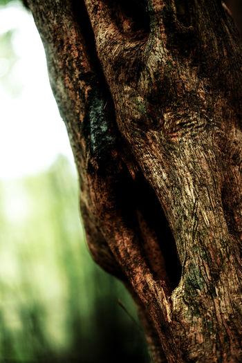 Old Tree. Fear