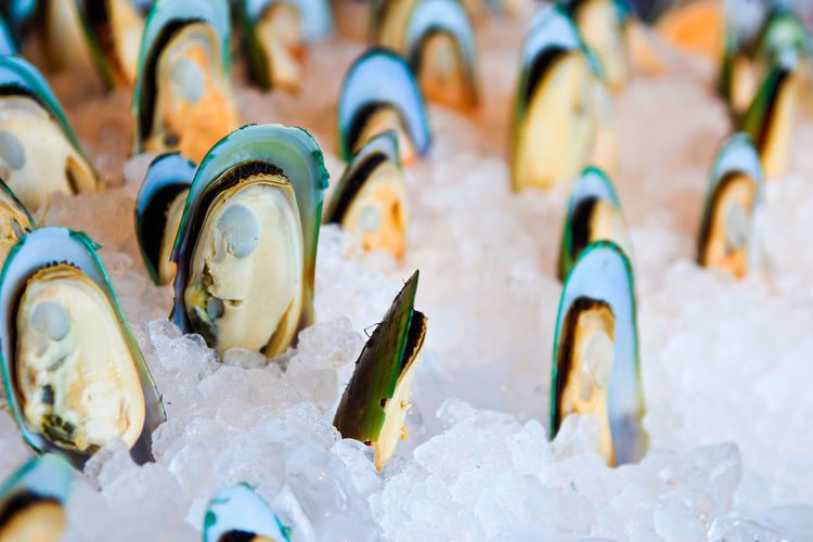 Mussels Seafood Close-up Food Frozen In A Row Market Mussels No People Snow