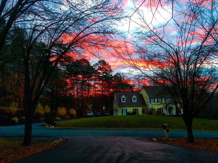 Sky on Fire Tree Architecture Building Exterior Built Structure Outdoors Road Bare Tree The Way Forward Growth Sky