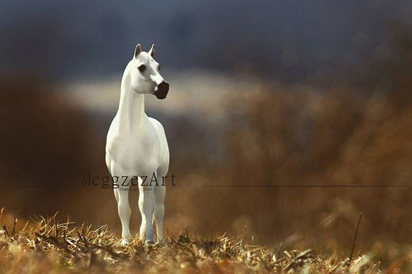 """""""Look at me that way again, and you may just claim whats left of my heart."""" . Breyer Breyers Breyerhorse Breyerhorses Breyerhorsephotography Modelhorsephotography Modelhorse Modelhorses Toyphotography Photography Horse Horses Custombreyer Breyercustom Breyermodel Custom Breyercollector"""