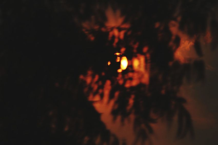that blood red sun... Sun Sunset Sunlight Sunshine Sunlight Through Trees Astronomy Moon Close-up Crescent Sky Only Meteorology Space Exploration Space Travel Vehicle Tranquil Scene
