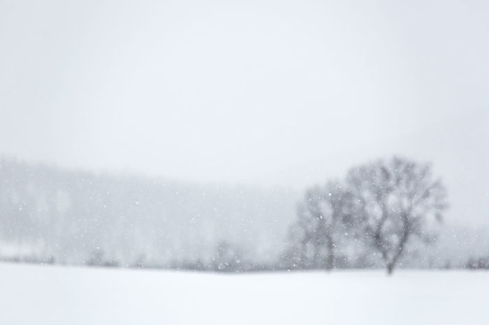 Arctic Bare Tree Cold Cold Temperature Copy Space Deep Snow Depth Of Field Forest Group Of Trees Landscape Nature Non-urban Scene Outdoors Remote Scenics Selective Focus Snow Covered Solitude Weather Winter Winter Wonderland Wintertime Focus On Foreground Northern Norway The Great Outdoors - 2016 EyeEm Awards