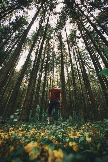 Rear View Of Person Standing In Forest During Autumn