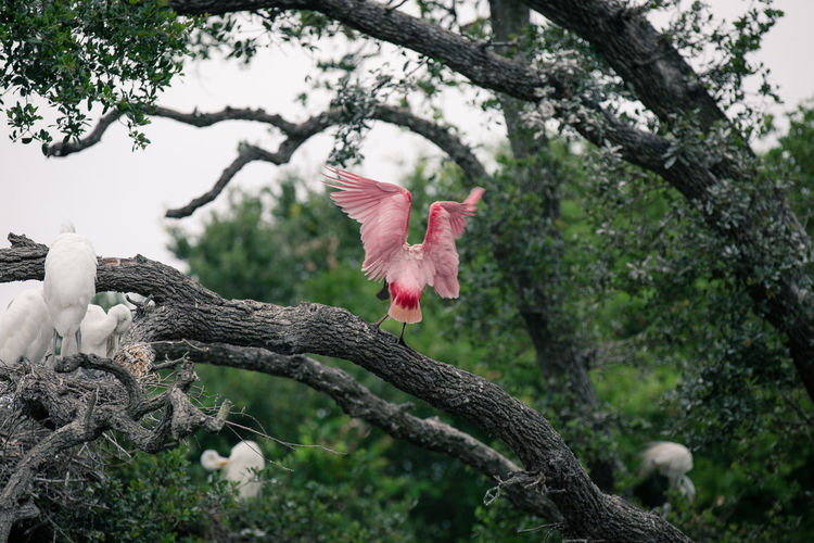 Beauty In Nature Birds Close-up Day Exotic Exotic Birds Focus On Foreground Freshness Nature No People Outdoors Pink Pink Color Spreading Wings Tree Tree Trunk