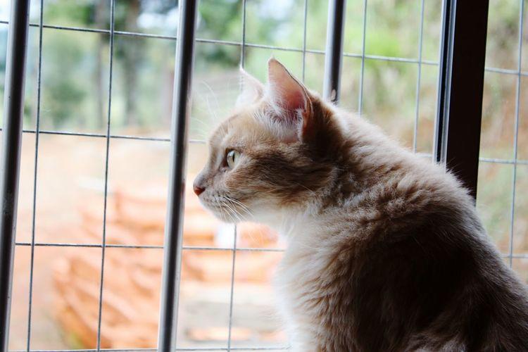 Pets Window Day