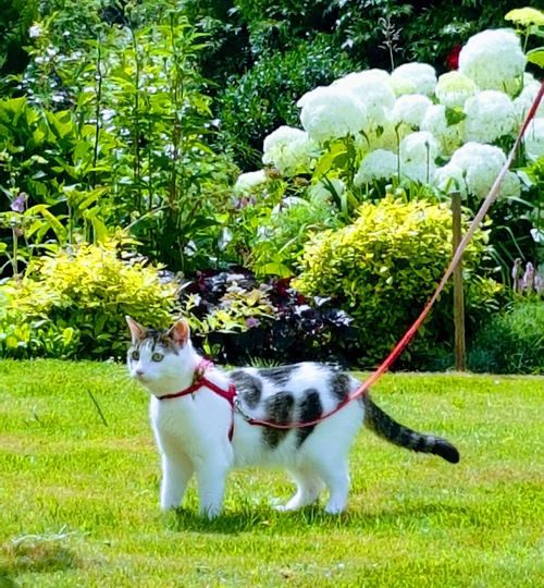 Galaxys7picture Pets Domestic Animals Animal Themes One Animal Mammal Front Or Back Yard Green Color Day Grass Outdoors No People Growth Portrait Nature Pet Portraits