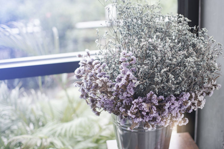 Close-up of purple flowering plant in glass vase