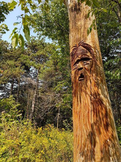 Toronto Wood