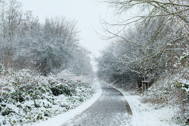 Road amidst trees during winter