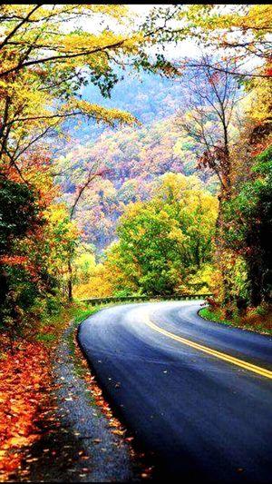 Autumn Real