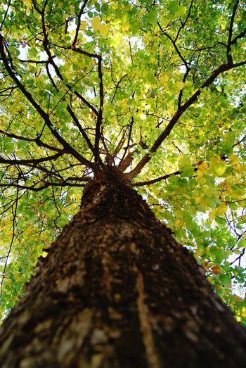 A century of life.. Leaves🌿 Green Naturaleza🌾🌿 Nature Eyemnaturelover Centuries Old Tree Trunk Trees And Sky Sonyphotography Sonyalpha Arboles árbol Hojas Verde Vida Verde Tree Branch Tree Trunk Forest Close-up Single Tree Greenery Vegetation Lush