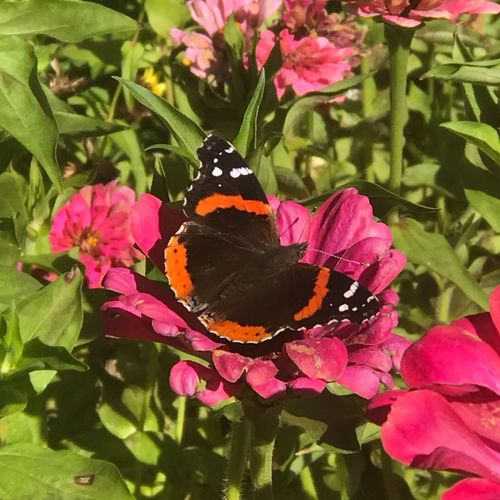 Flower Beauty In Nature Flowering Plant Plant Freshness Pink Color Nature Fragility Butterfly - Insect A New Beginning